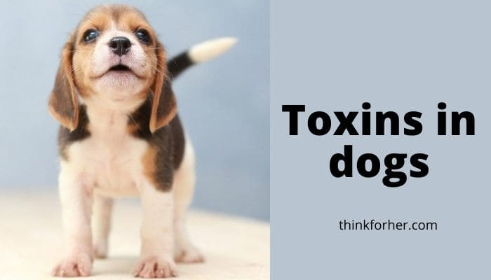 Toxins in dogs