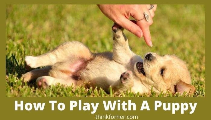 How To Play With A Puppy