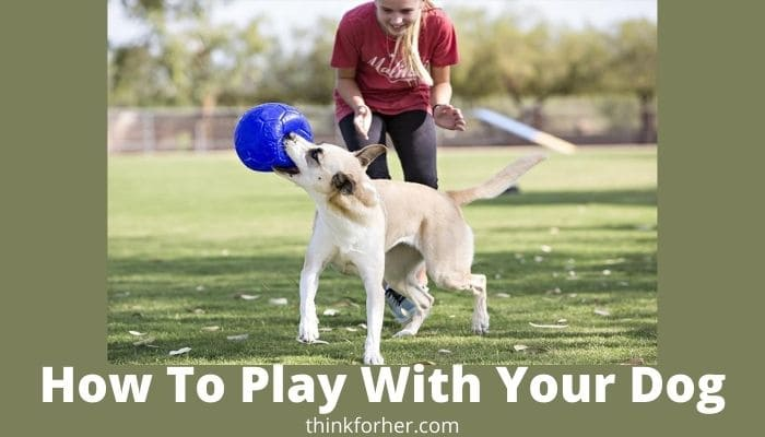 How To Play With Your Dog