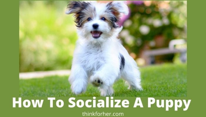 How To Socialize A Puppy