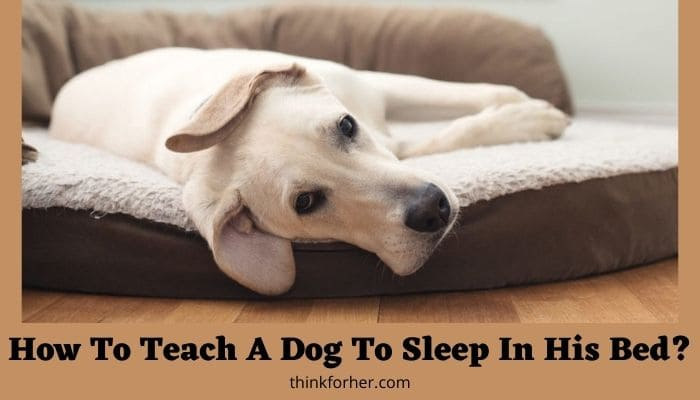 How To Teach A Dog To Sleep In His Bed?