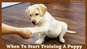 When To Start Training A Puppy